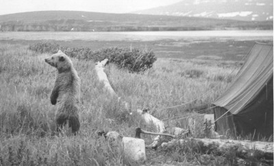 Bear_in_camp_old_photography