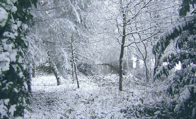 Snowy_frosty_fairly-tale-like_forest-01-Zenera