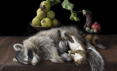 Witham_OnRipenessandRot10_raccoon copy