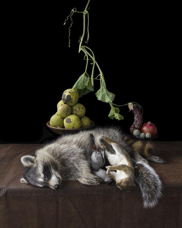 Witham_OnRipenessandRot10_raccoon